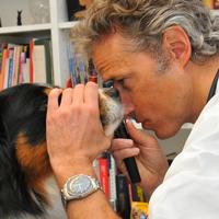 Sindrome Vestibolare del Cane Anziano. Dott Luca Ferrero