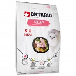 Ontario Cat Kitten al Pollo...