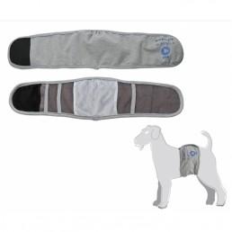 Fascia igienica per cani maschi