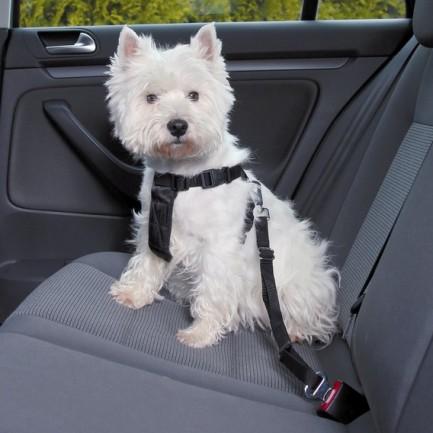 Safety belt pettorina per auto