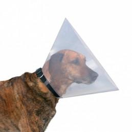collare veterinario elisabettiano