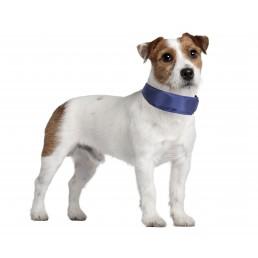 Collare Rinfrescante per Cani