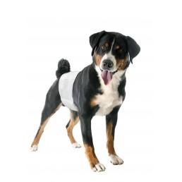 Fascia Igienica per Cani Maschi Usa e Getta