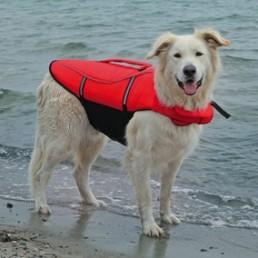 Life Vest Salvagente per Cani