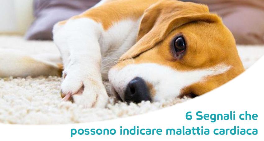Patologia Cardiaca Nel Cane I Segnali E Le Cause Da Non