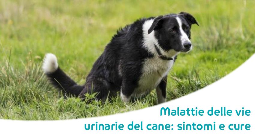 sintomi del cane prostatite