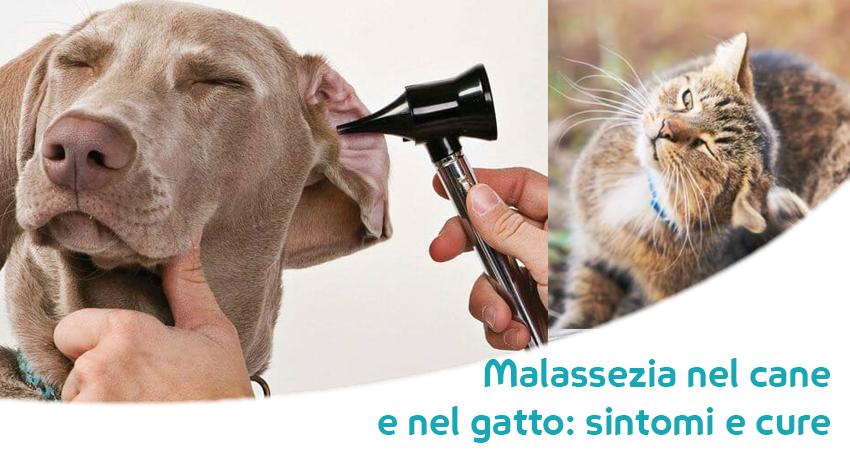 come riparare linfezione del lievito dellorecchio del cane