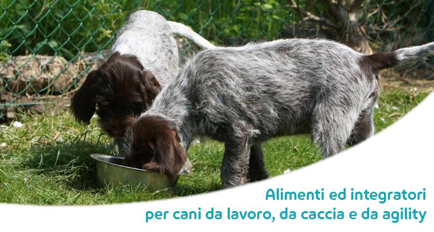 Artrosi e artrite nel cane: corretta alimentazione e condroprotettori per cani