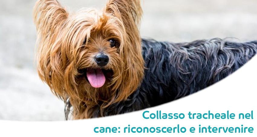 dieta per insufficienza cardiaca nei cani