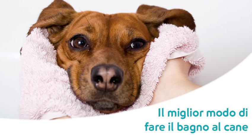 Il miglior modo di lavare il cane paco - Come fare il bagno al cane ...