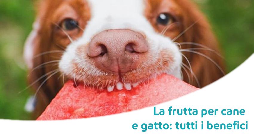 Frutta Per Cane E Per Gatto Ecco Perché Fa Così Bene Paco