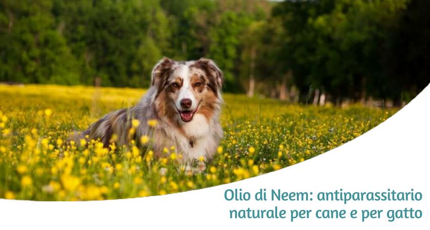 Olio Di Neem Antiparassitario Naturale Per Cani E Gatti