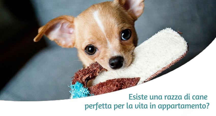 I cani di taglia piccola sono sovente i cani che crediamo più