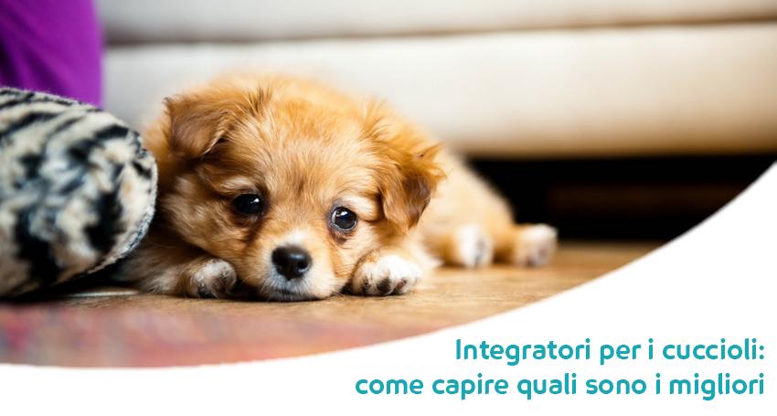 I Migliori Integratori Per Cuccioli Di Cane Paco