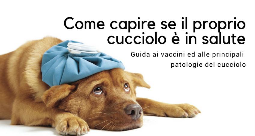 Malattie E Problemi Di Salute Nel Cucciolo Di Cane Paco