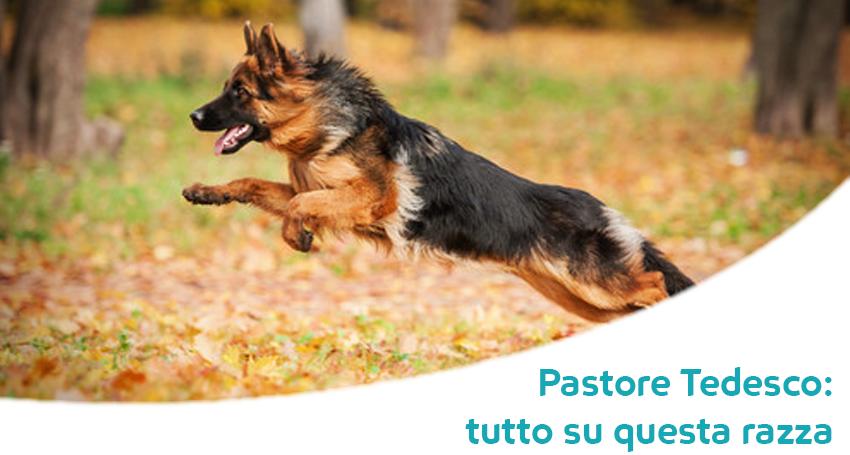 Cane Da Pastore Tedesco Carattere Caratteristiche E Storia