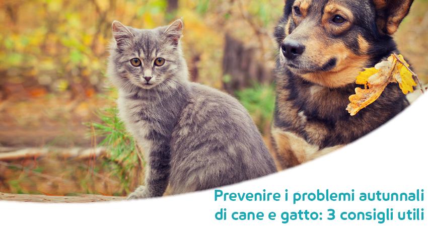3 Consigli Per Il Cambio Di Stagione Per Cani E Gatti