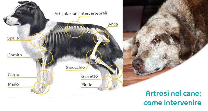 Artrite nel cane: cause, sintomi, cura e rimedi naturali