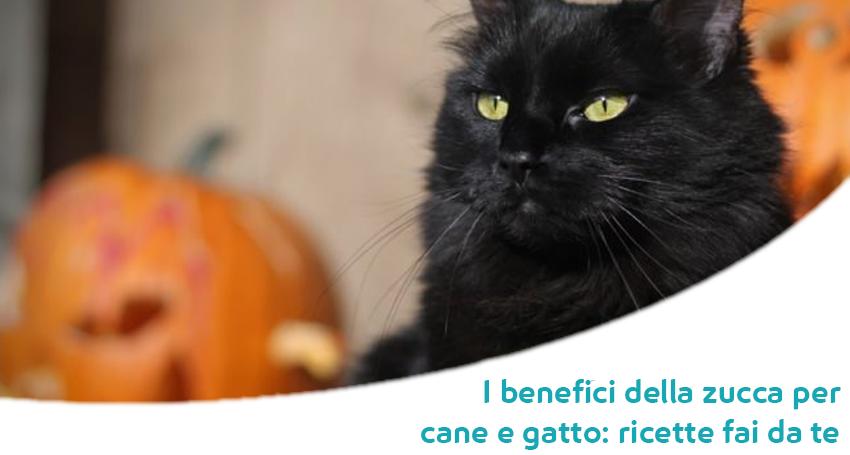 Tutti I Benefici Della Zucca Nellalimentazione Per Cane E Gatto