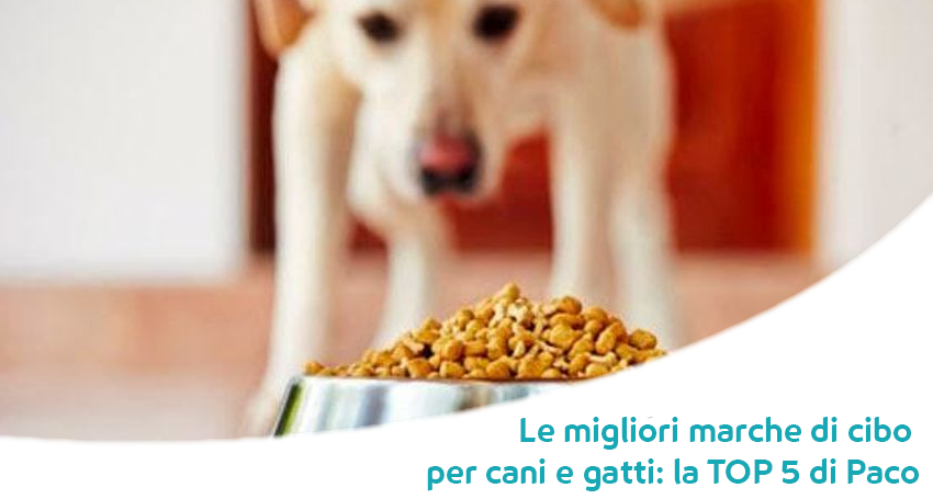 i migliori crocchette e umidi per cane e gatto per la giornata