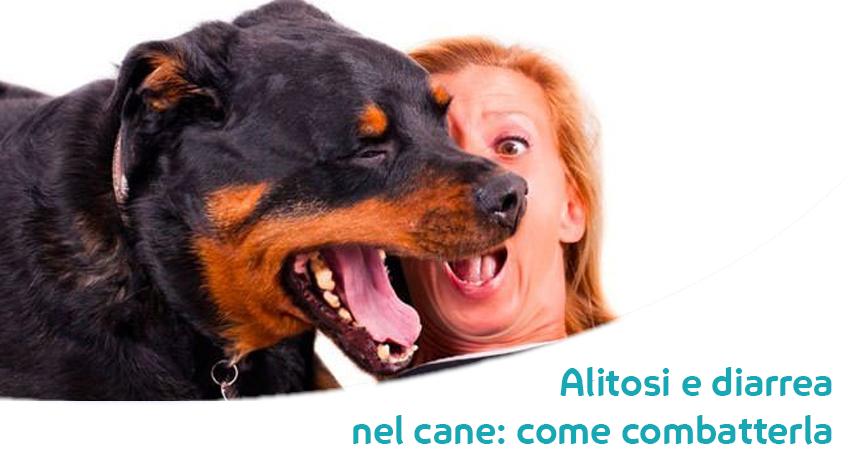Il Tuo Cane Ha Lalito Pesante E La Diarrea Non Temere Ecco I