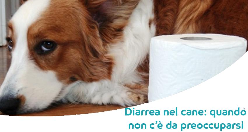 Diarrea Nel Cane Diversi Tipi Cause E Quando Preoccuparsi