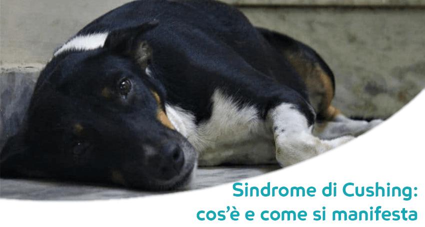 cane con fegato gonfio e minzione frequente