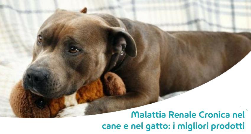 I Migliori Alimenti Diete Ed Integratori Per Cani E Gatti Con Malattia Renale Cronica Paco
