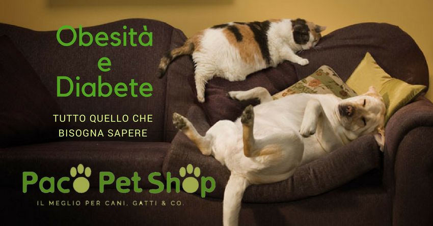 Il ruolo dell'obesità nell'insorgenza del diabete in cani e gatti