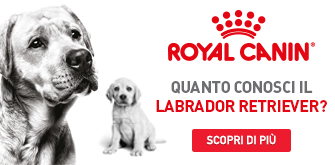 labrador royal canin