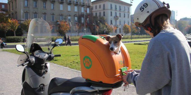 clair et distinctif fournir un grand choix de sélectionner pour le dédouanement In moto o in scooter con il proprio cane: quando e come