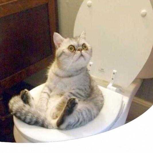 Come Raccogliere Le Urine Del Gatto Senza Spendere Il Metodo