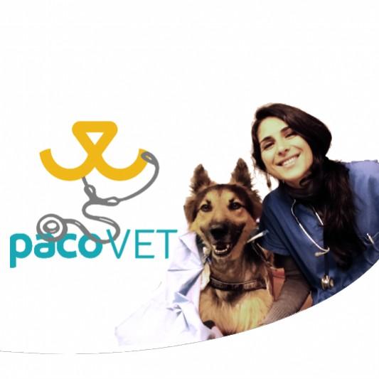Malattia Renale Cronica O Insufficienza Renale Di Cane E Gatto I