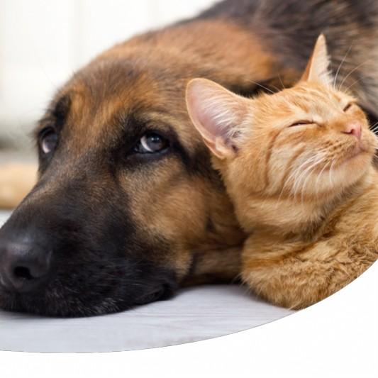 b. cani e gatti prostatite